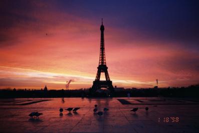 Pigeons, Paris