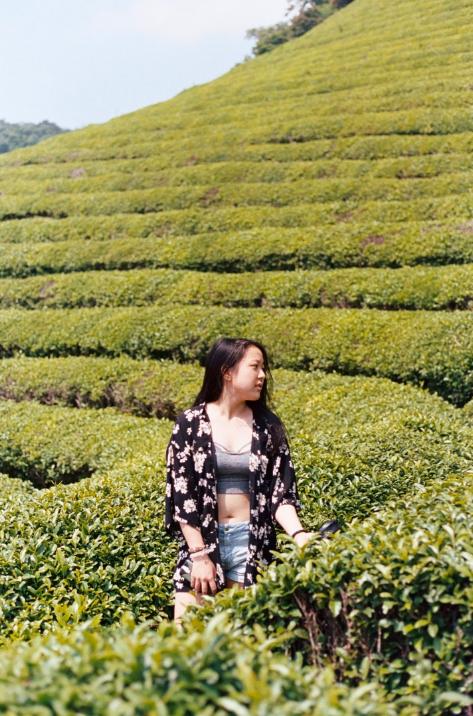 Caitlyn, Boseong Green Tea Fields